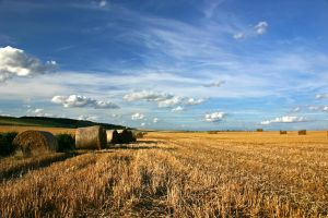 Harvest 03 by mordoc-stock