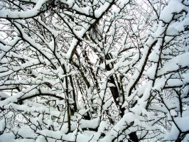 Frosted Pear Tree by MyLaundryStinks