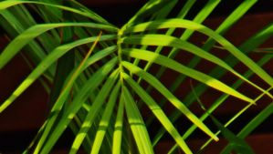 Sun Dappled Fronds by DemonDisasters