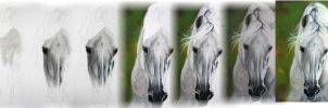 White horse - step by step by ArtiaWolf