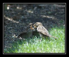 Momma Bird and her babies... by NikonCha