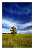 a Pine on the Field by jjuuhhaa