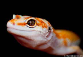 Leopard Gecko by basticelis