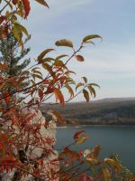 leaves at Devils lake by cottoncandysheep