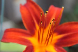 Fiery emotions. by BeautifulMiracle