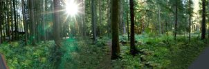 180 degree forrest panorama by Wodenphoto