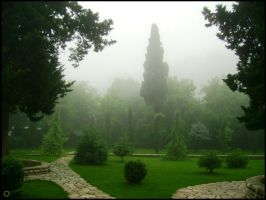 Garden In The Fog by saniday