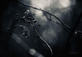 Autumn Rain by JoniNiemela