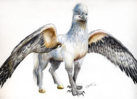 Hippogriff by emma143