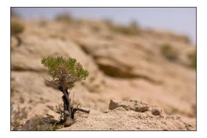 red rock canyon 02 by unAmerican