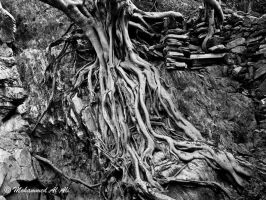 Rooted by mhmalali