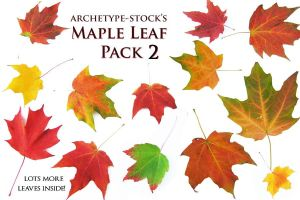 Maple Leaves Pack 2 by archetype-stock