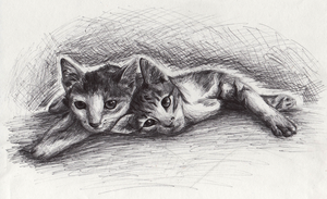 Realism cats by dorizard