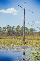 Big Branch Swamps by Ray-Devlin