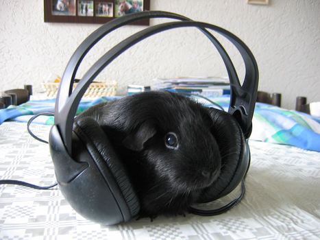 Dude, music is my life by L-a-u-r-a