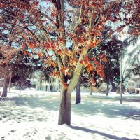 Fall meets Winter by marc-the-kid
