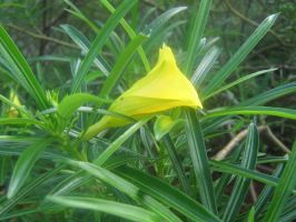 yellow flower 01 by CotyStock