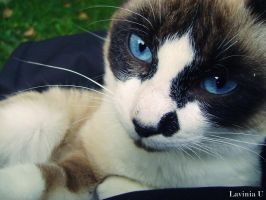 My little blue eyed Amadeo by LaviniaU