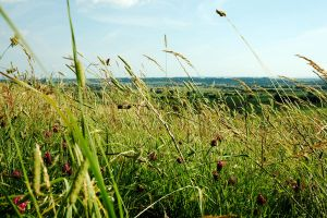 Lying Down in the Long Grass by EarthHart