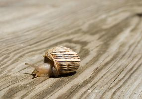 Caracol 01 by SuperStar-Stock
