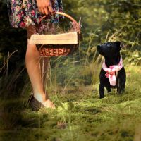 What's in your basket? by FairyCat60s