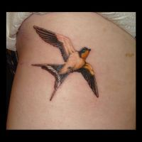 Swallow tattoo by kshandor