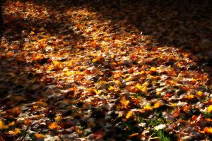Golden Carpet by AndehDulac