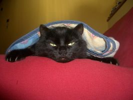 Many times ago - my cat by AliceSacco