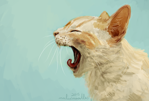 Cat painting study thing I guess? x3 by notifyneelix