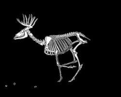 Skeleton Deer Run Cycle by LimitlessEndeavours
