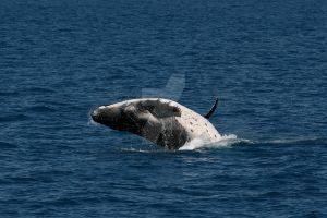 Whale Cub II by wilderBeest