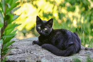 Black kitten by IsulaTurchina