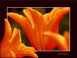Passionate Orange by Buble