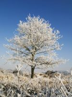 Snow landscape tree by jvg2