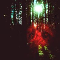 Forest Dog by Damaged666