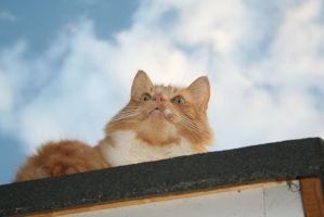 Cat on a Hot Felt Roof by tammyins