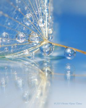Reflection drop4 by dini25
