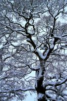 Complexity of SNow II by mrholidaymaker