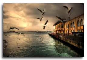 seagulls of istanbul by ottoman611