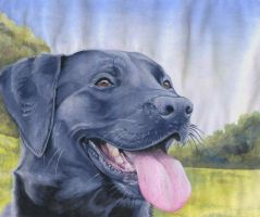 Black Labrador Study by FeatherGale