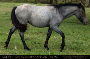 Bay Roan Yearling 2 by SalsolaStock