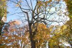 Autumn Tree by dsmith15233