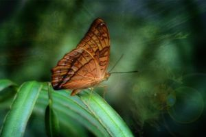 Butterfly1.0 by AndreaHaesler