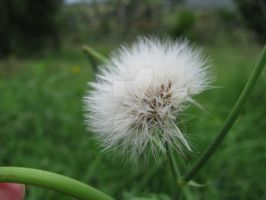Fluff 5362 by Maxine190889