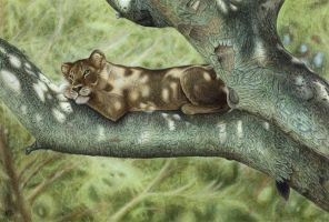 Lioness in Tree by Atarial