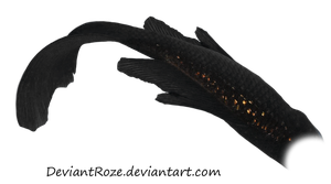 Mermaid Tail 07 (Black Koi) by DeviantRoze