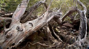 Tree Wreck by FireflyPhotosAust