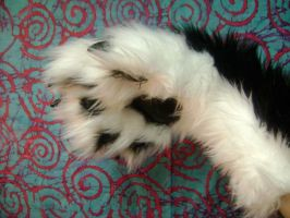Realistic paw by creepshow89