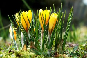 Yellow and Green by EarthHart