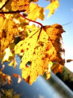 Leaves 2 by b-a88